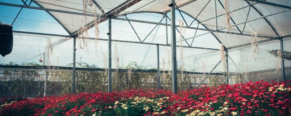 focus industrie floricole - article